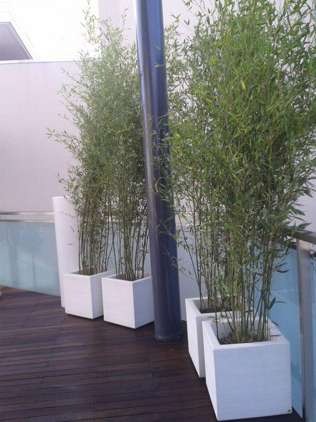 Crea il verde bergamo allestimento chiese terrazzi e for Bambu in vaso prezzo