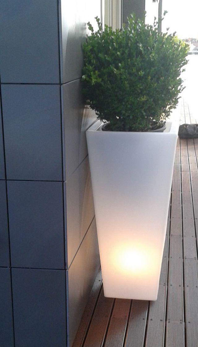 Crea il verde bergamo allestimento chiese terrazzi e for Bosso in vaso