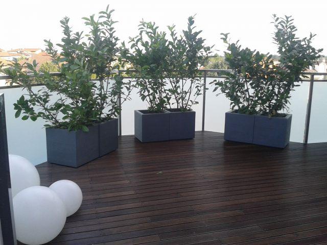 Crea il verde bergamo allestimento chiese terrazzi e for Vaso attico